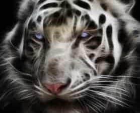 Tiger Jinn Genie Spirits
